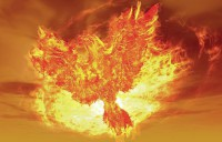Phoenix Reborn From Fire - Path to Get More Clients